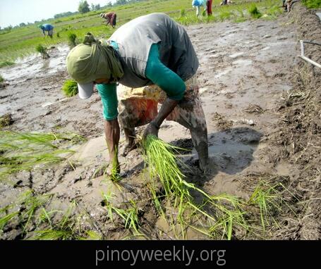 Hacienda Luisita ng mga Magsasaka | bayangpilipinas